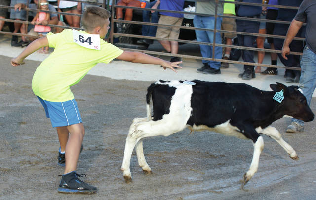 Gavin Hardacre grabs a tag off a scrambling calf in the 10 year olds division of Sunday's July 30 Kiddie Calf Scramble at the Greene County Fair in Xenia.