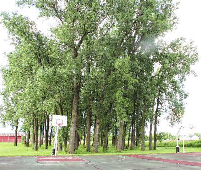 Linda Collins | Fairborn Herald The proposed new walking path will skirt the basketball courts and jog northwest and run through ta group of trees that stand on township property.