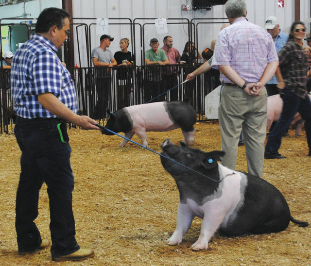 Greene County celebrities showing swine. Some participants included Greene County Sheriff Gene Fischer, Beavercreek Mayor Bob Stone, Greene County Juvenile Court Judge Adolfo Tornichio in addition to some local media personalities.