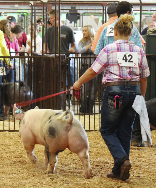 Jitter Bugs 4-H Club member Danielle Clarkston showed hogs at the fair for the second year in a row.