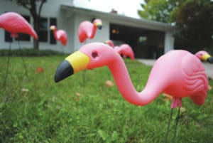 Flamingos to flock local yards
