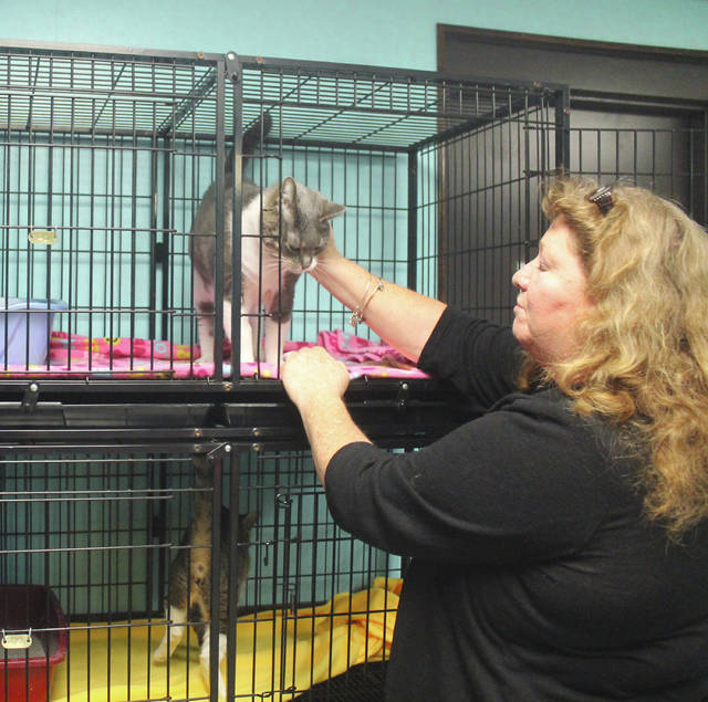 Anna Bolton | Greene County News Greene County Animal Care and Control Director Julie Holmes-Taylor pets Franklin, a 9-year-old domestic short-haired cat who is up for adoption.