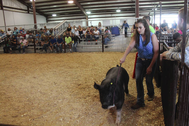 Anna Bolton | Greene County News Emma Schnecker shows one of her barrows during the swine jackpot show at the Greene County Fair July 30.