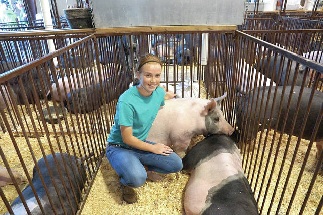 File photo Josie Faris takes time to spend with her hogs during weigh in on the Greene County Fairgrounds in 2017.