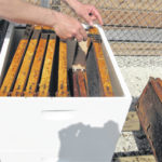 Parks, beekeepers to host honey harvest