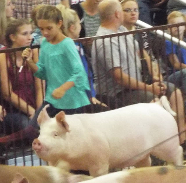 Natalie Jones | Greene County News Lola Smith trying to keep her hog away from the fence. Smith won fifth in her class.