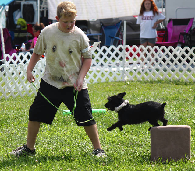 Canine Emperor River Demmy-Stover handles Eddy as he jumps off a block during a rally event.